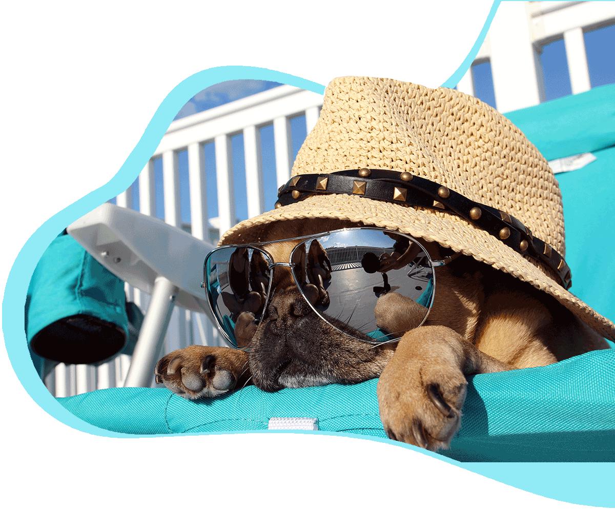 https://myrtlebeachdoggrooming.com/wp-content/uploads/2021/03/Myrtle-Beach-Dog-Grooming-Header.png